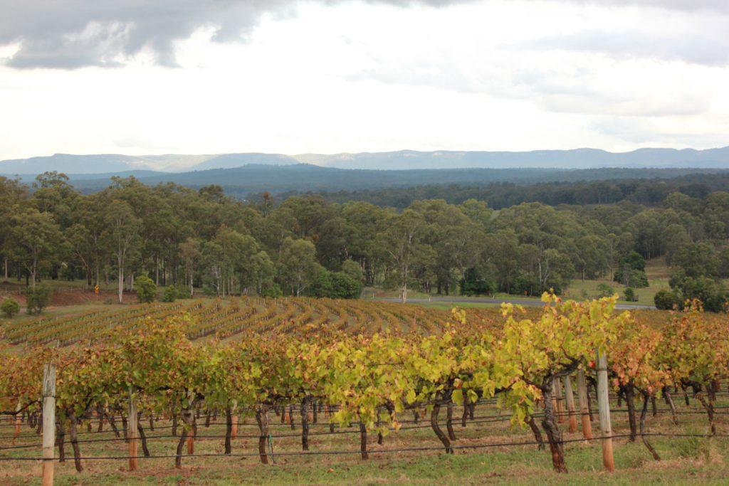 Organic Grape Vines