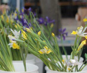 Farmers Market Flowers In buckets