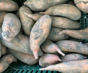 farmers market sweet potatoes