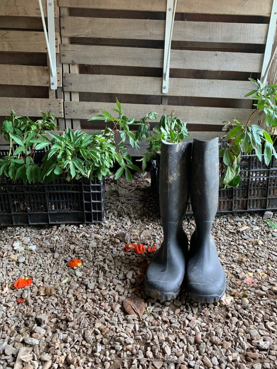 farm boots in front of harvested lettuce