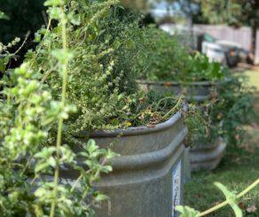 1892 Restaurant herb garden